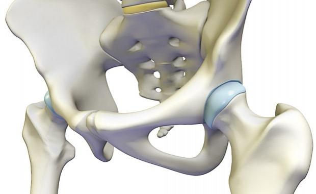 anatomic-hip