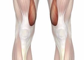 quadriceps-vastus-medialis-highlight-m